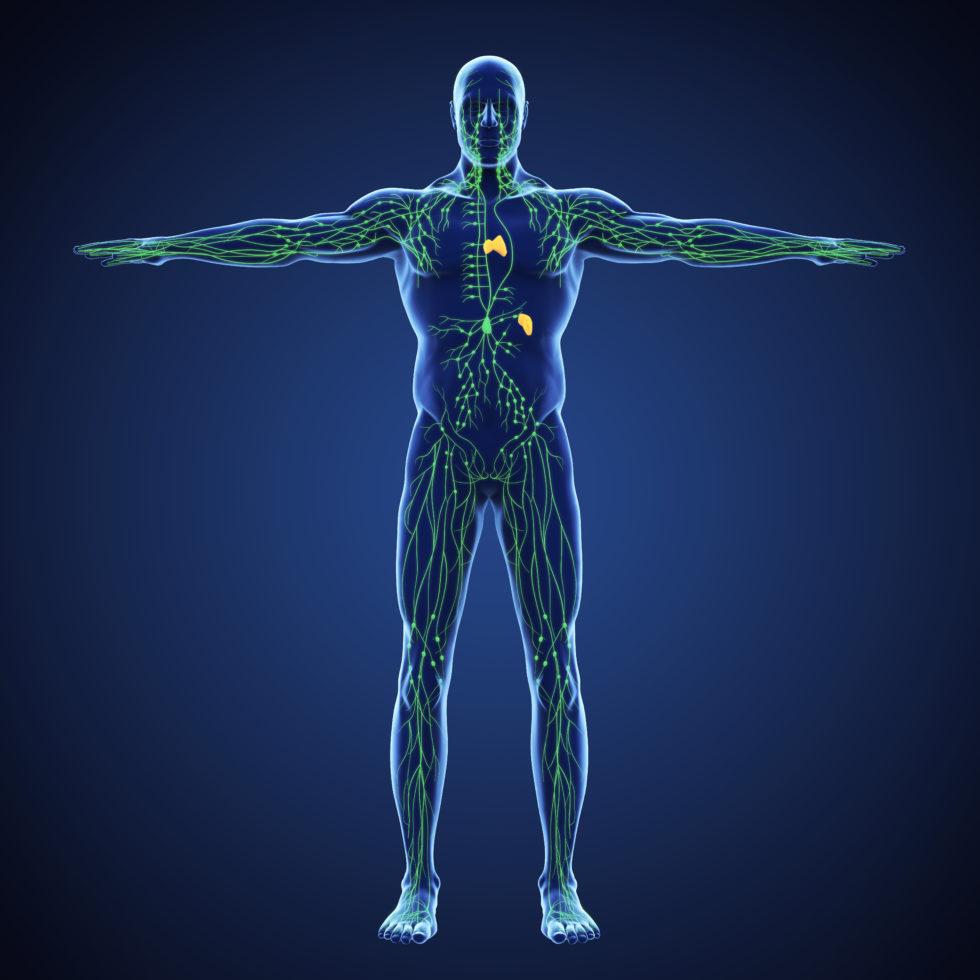 Immun Boost Bild