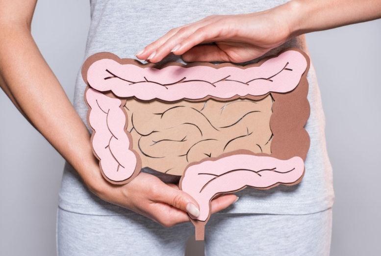 Fettverbrennende Darmbakterien